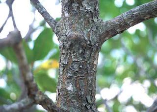 Bagian Utama Tumbuhan dan Fungsinya