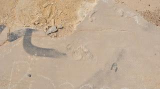 Ευρετήριο απολιθωμάτων