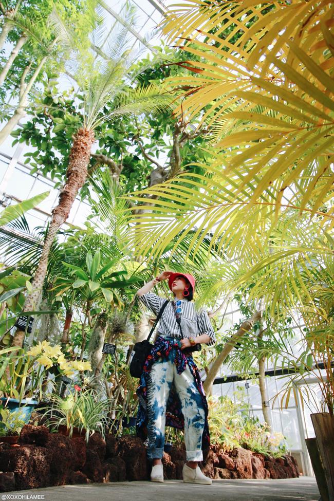 半田山植物園 温室