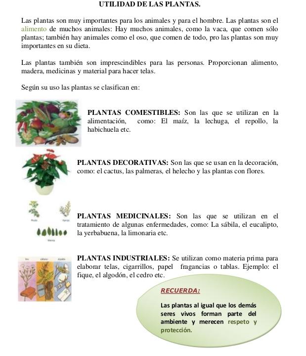 Las plantas utilidad de las plantas for Utilidad de las plantas ornamentales
