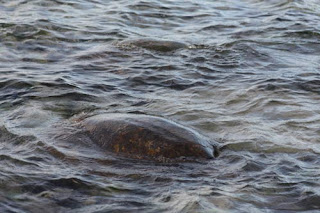 Turtle Rock.