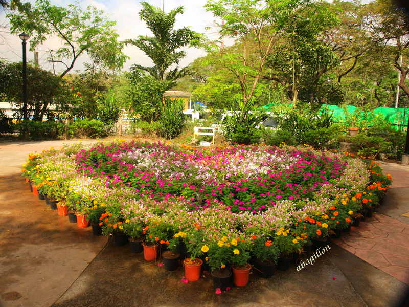Andrea 39 s plants photos and travels philippines for Philippine garden plants