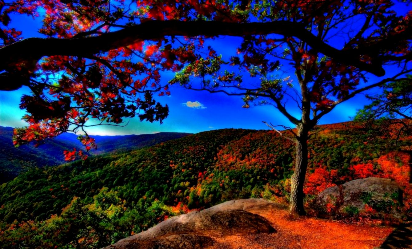 Desktop Wallpaper Hd Full Screen Free Download Nature
