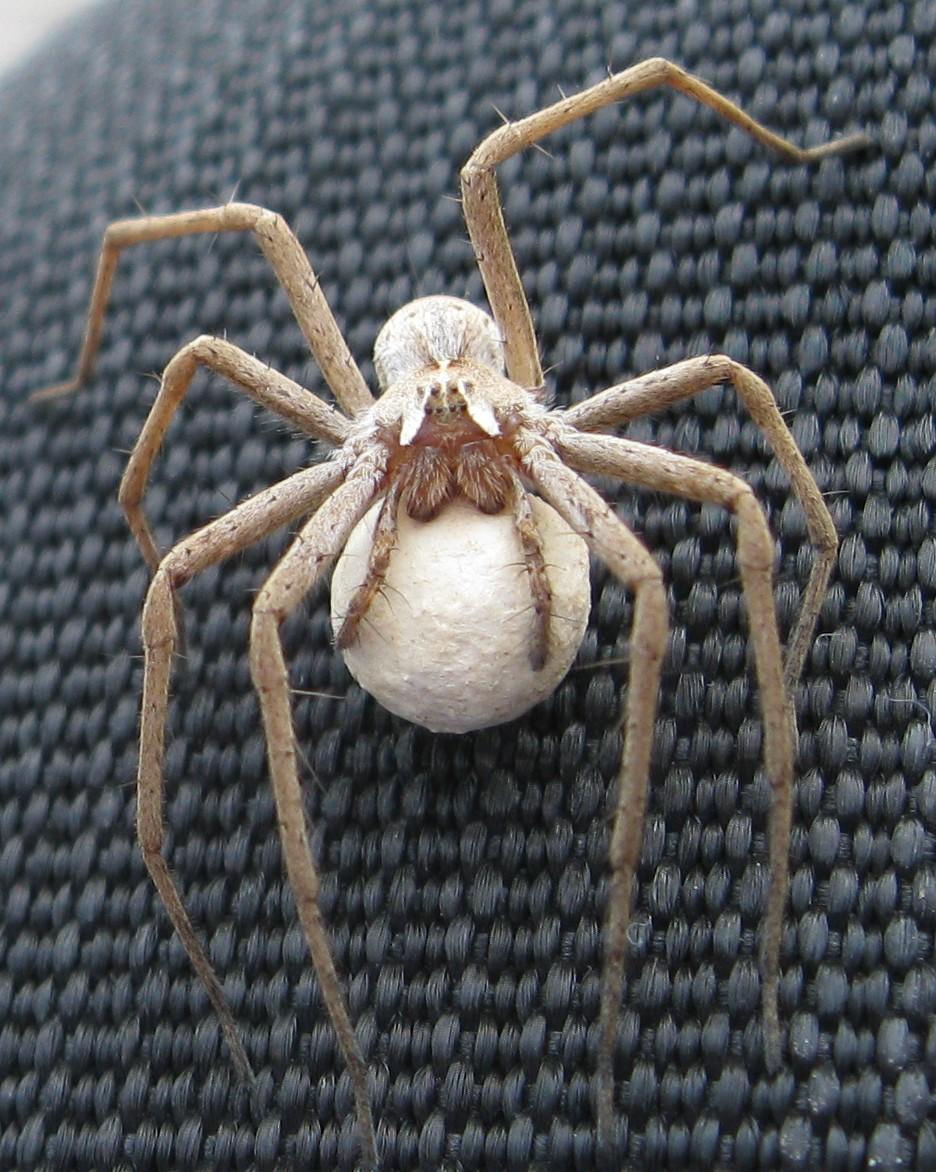 apollo 18 spider -#main