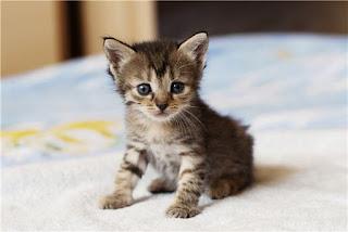 Κρήτη: Υπάνθρωποι την Μ.Παρασκευή σούβλισαν ...γατάκι