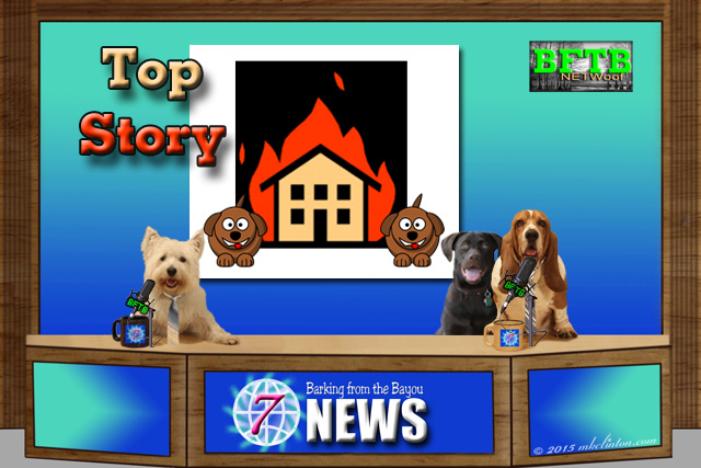 BFTB NETWoof News set with dog and home fire as top story