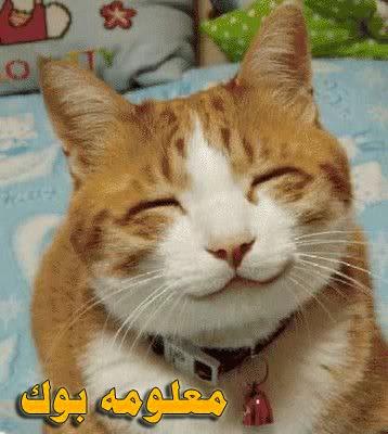 الحيوانات تبتسم