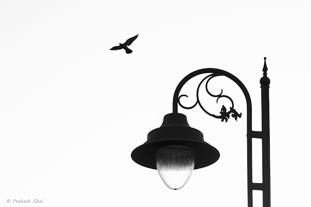 A Bird Flying across the sky contrasting well to the stationary Street Lamp.