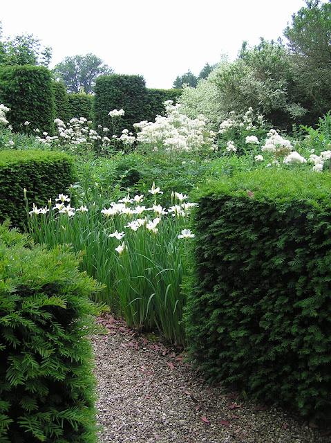 białe kwiaty w ogrodzie, biały ogród
