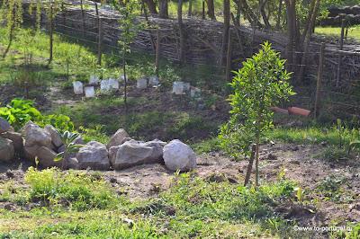 деревья в португалии
