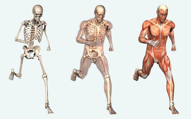 Apa saja penyakit pada tulang