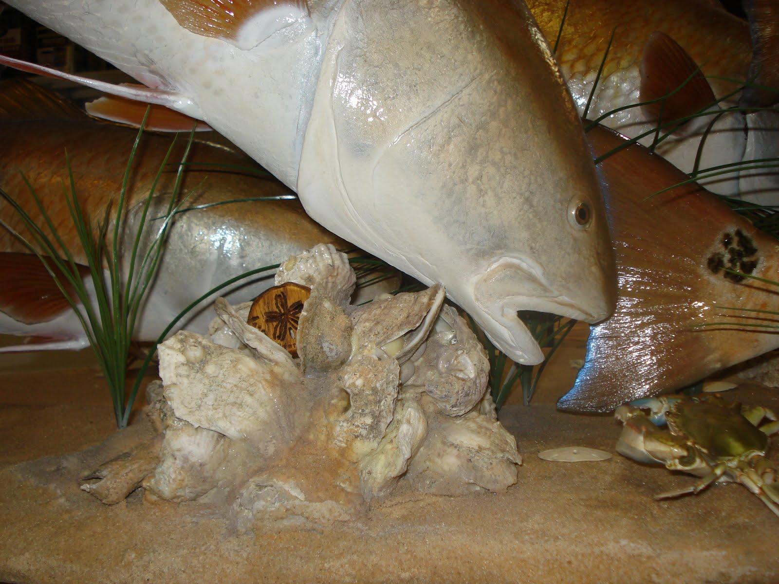 Garza Taxidermy: More Redfish Scene Pictures