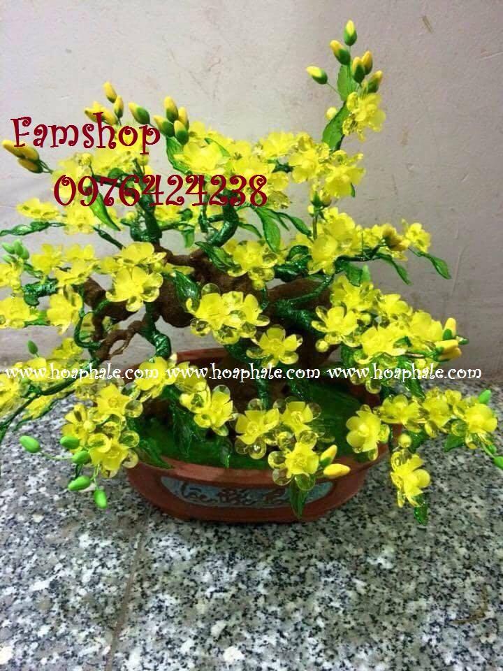 Goc bonsai cay hoa mai tai Pham Van Dong
