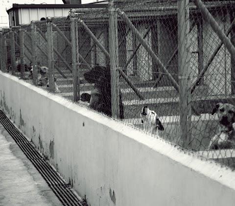 CUENTO La perrera | Ángel Fuentes Balam