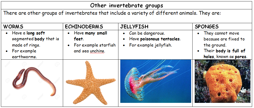 science and physical education invertebrate animals classification