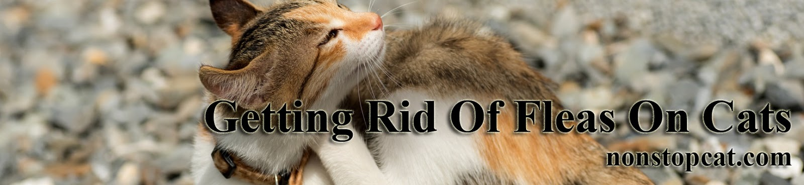 Getting Rid Of Fleas On Cats