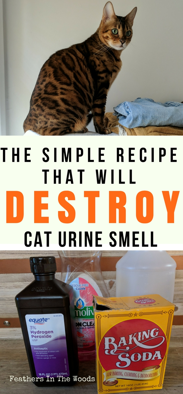 Remove Cat Pee Smell Permanently Feathers In The Woods