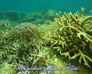 terumbu karang di pulau karimunjawa