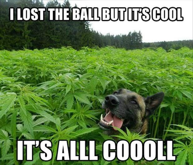 Funny Cannabis Field Dog - I lost the ball but it's alllll cooollll