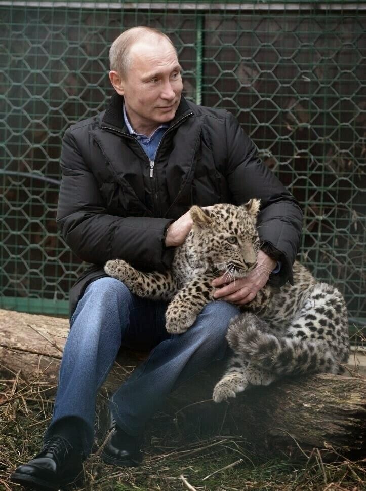 e1432a300d7a7 Russian President Vladimir Putin Cuddling with a Persian Leopard ...