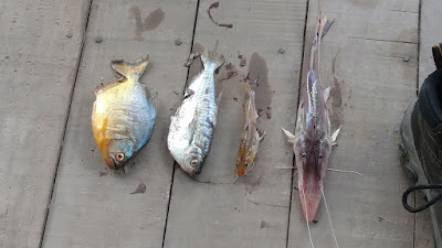 river fish of the Tombopato river