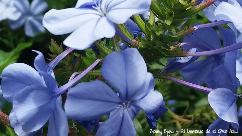 El universo del gato azul flores de m jard n mi for Ahuyentar gatos de mi jardin