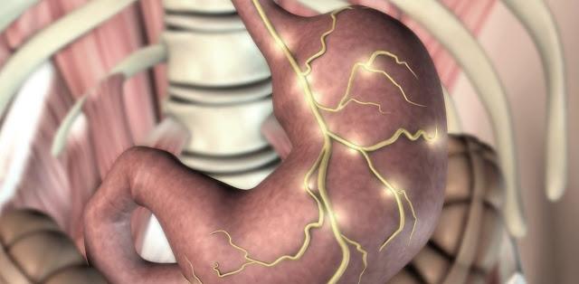 Estomago y biologia