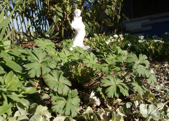 Organic Garden Dreams: Notes From the Garden