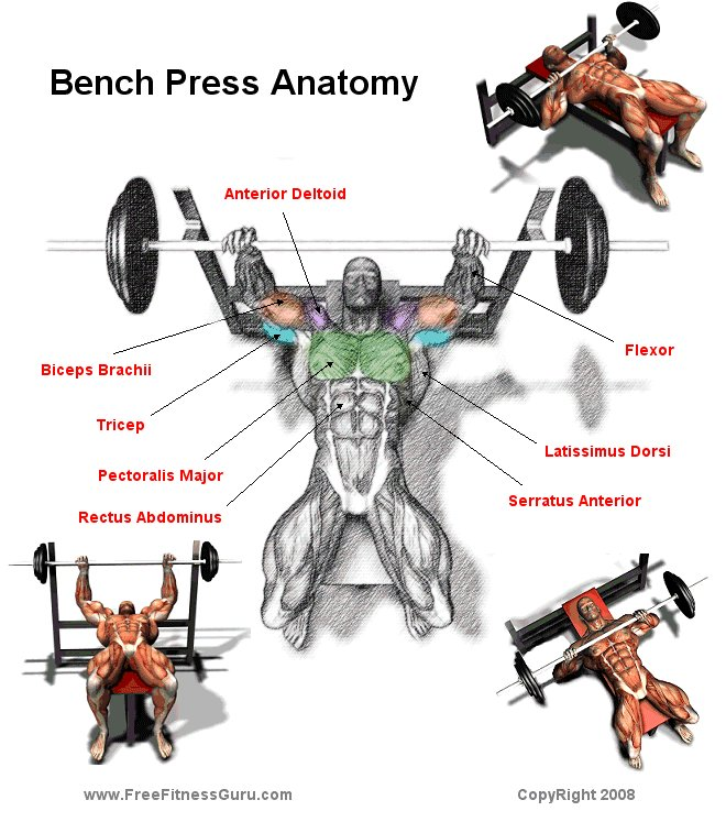 the best exercises to include in your muscle building