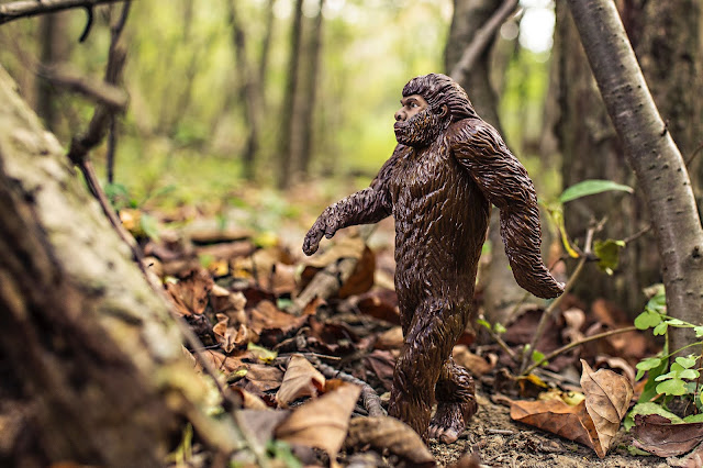 داروين و نظرية التطور