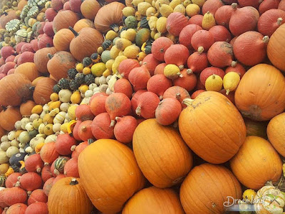 The Differents of Pumpkins