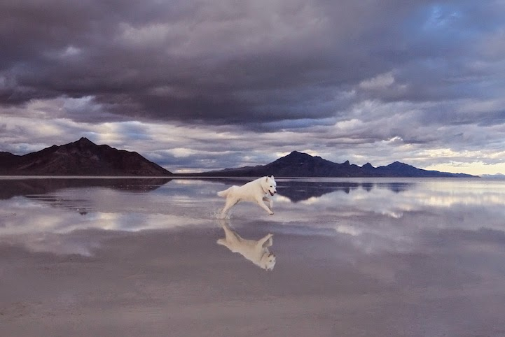 Bonneville Salt Flats, Utah - He Toured America's Pristine Wilderness…And He Took His Human Along For The Ride.