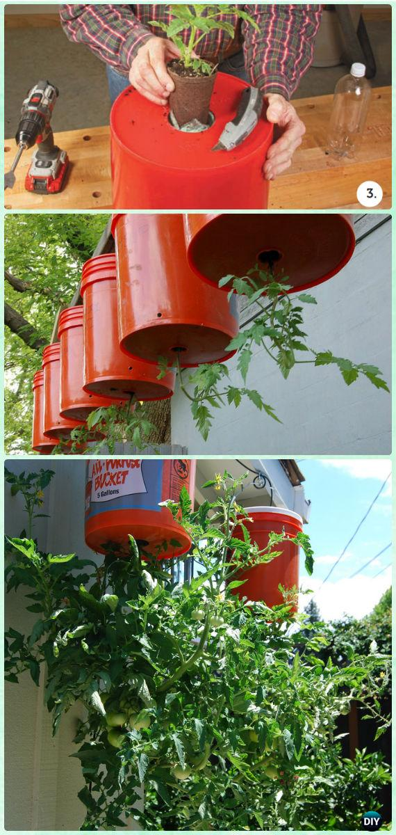 Grow tomato upside down in bucket garden favorite for Ideas for tomatoes from the garden