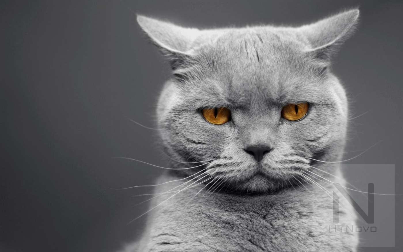 Cat-Expressions-2