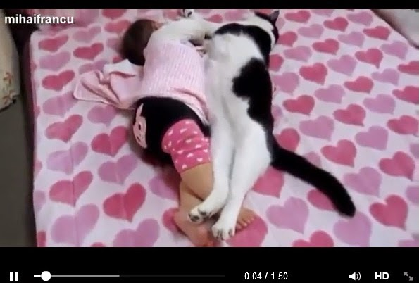 http://www.funmag.org/video-mag/mix-videos/babies-and-pets-sleeping/