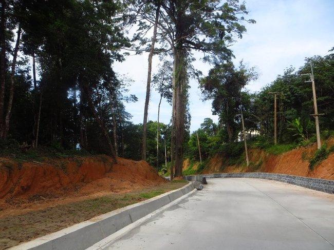 Большое дерево над дорогой