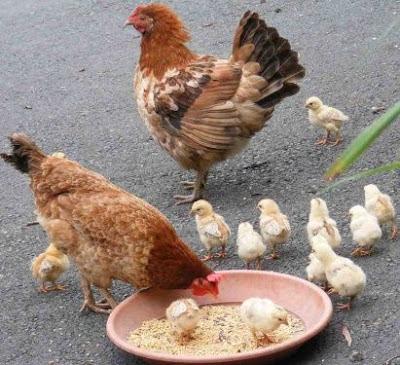 الغذاء عند الحيوانات