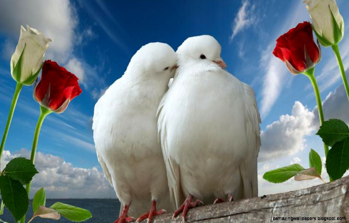 Love Birds Pictures Download