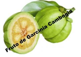 ¿Se adelgaza, en verdad, con Garcinia Cambogia?