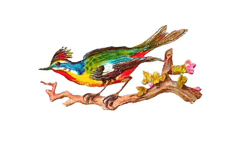 free clipart of vintage birds - photo #46
