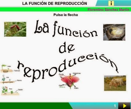 http://cplosangeles.juntaextremadura.net/web/edilim/curso_3/cmedio/los_seres_vivos_3/la_reproduccion/la_reproduccion.html