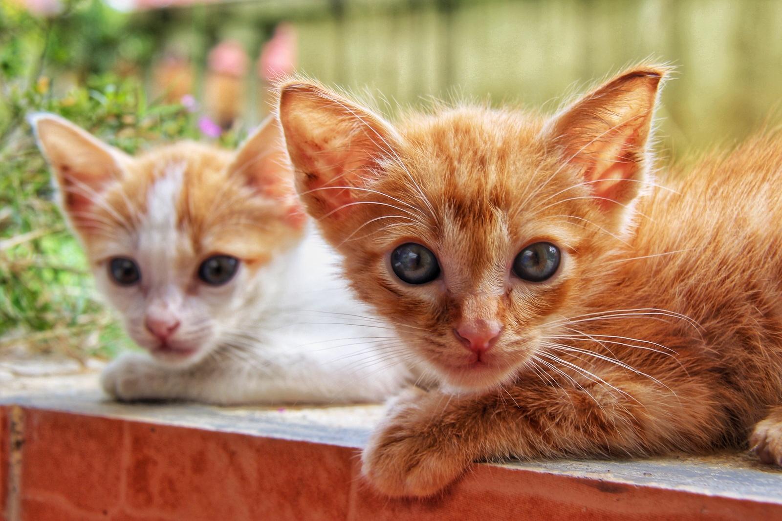 Mengenang Kucing Kesayangan Kami Opet Dan Oyen