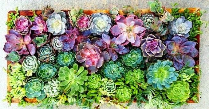 Light wood love decoraci n floral con plantas suculentas for Decoracion con plantas suculentas