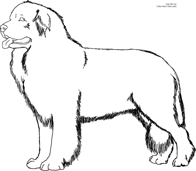 Newfoundland Dog Coloring Page Within Coloring Pages Dogs