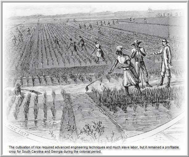S T R A V A G A N Z A: COLONIAL AGRICULTURE IN THE U.S.