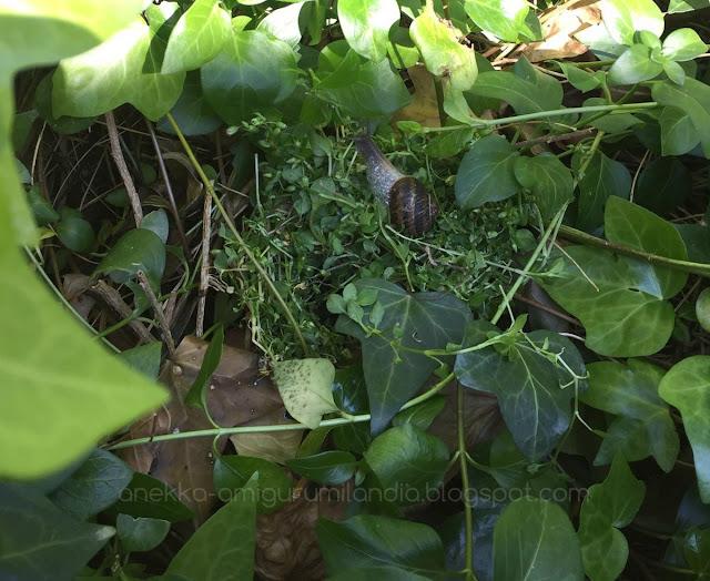 caracol en la naturaleza