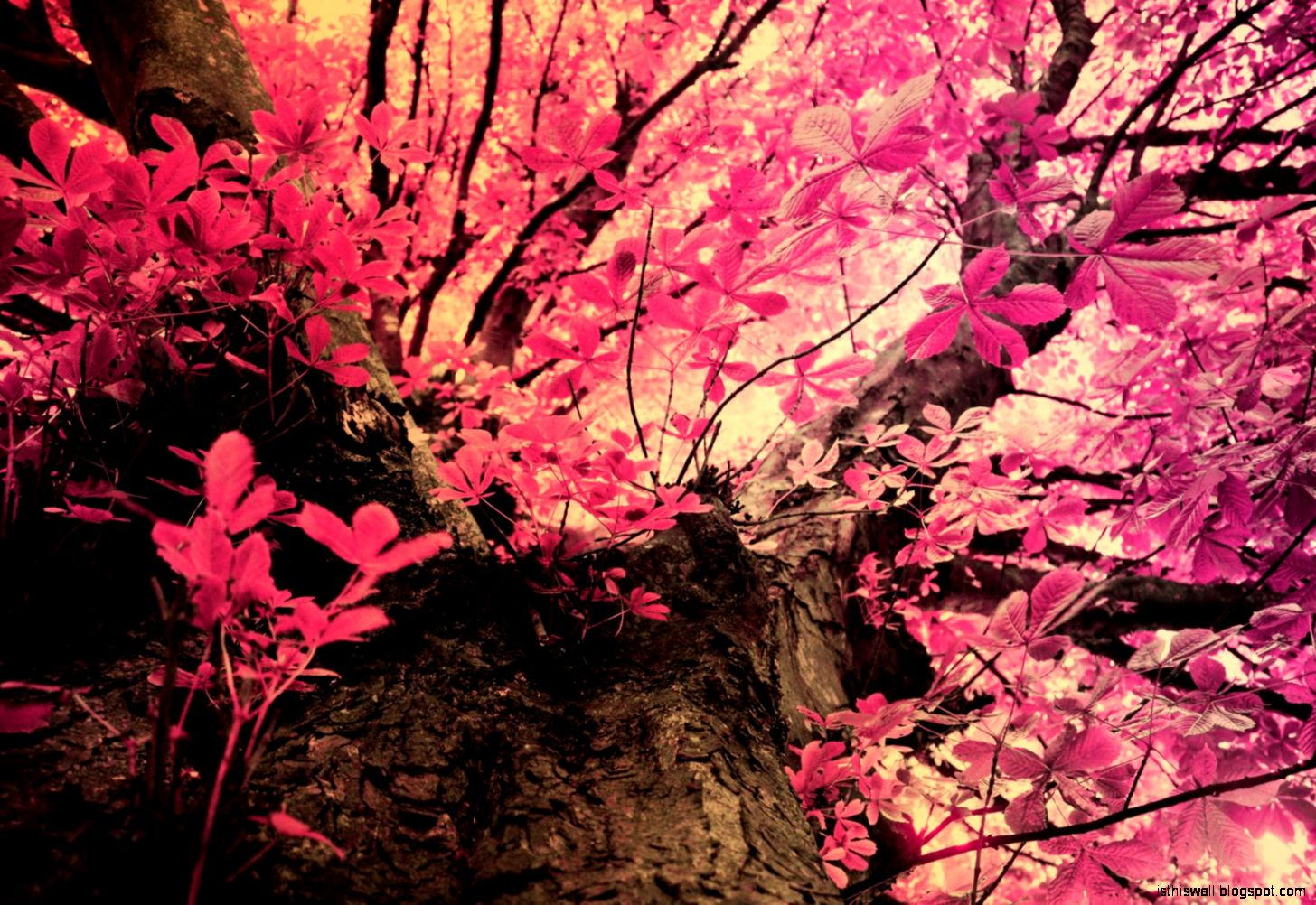 Pink Camo Wallpaper | This Wallpapers