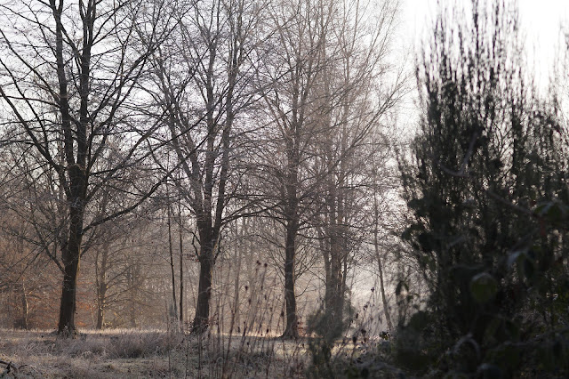 one minute in the frosty forest