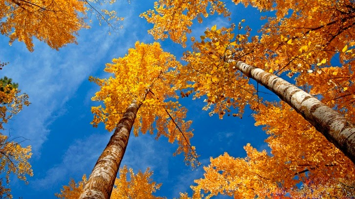 best fall autumn wallpaper yellow forest and blue sky
