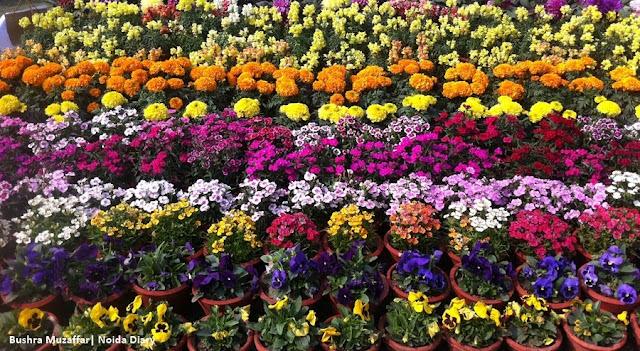 Noida Diary: 30th Noida Flower Show